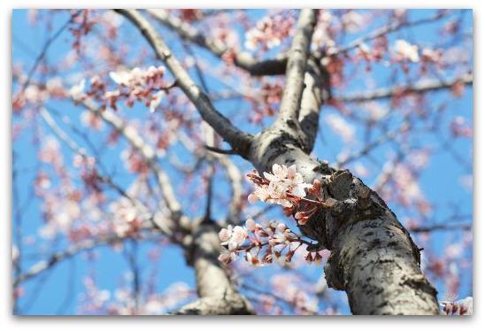 Equinozio di primavera arriva la primavera - Primavera uccelli primavera colorazione pagine ...
